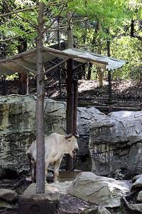 寝室に帰るゴールデンターキン - 動物園放浪記
