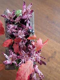 ホトトギスとナツハゼ - 暮らしと植物のブログ