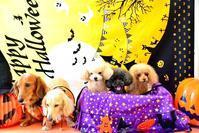Happy Halloween` - *Hanapepe  Life*