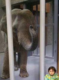 東山動物園 - ウィズアンドウィズ スタッフブログ