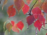 10月の庭から ナンキンハゼ・ジューンベリー・ハナミズキ - azukki的.