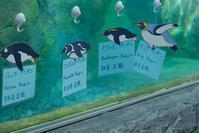 旭山のペンギン達 - 動物園に嵌り中