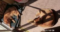 明け方と昼の気温差が15℃以上 - 猫と自然と散歩の日々