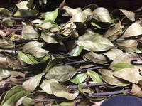 ハンドメイドフェスタ「リースの材料。たっぷりのローリエ&ユーカリが届きました。」編 - 納屋Cafe 岡山