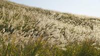 今日の仙石原すすき草原 - エーデルワイスPhoto
