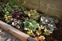 落ち着いて庭仕事ができる季節 - ヒバリのつぶやき