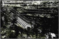 緑の階段 - コバチャンのBLOG