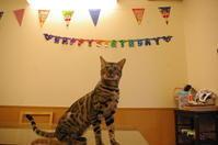 HAPPY 1st BIRTHDAY!とた〇取物語つづき - ♪天使たちの優雅な生活♪