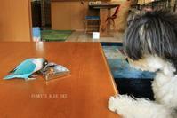 B.B & Chipo* またも「おやつ実験♪」 (動画×3) - FUNKY'S BLUE SKY