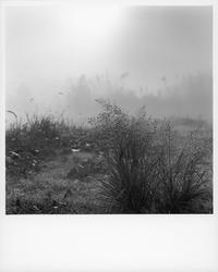 朝霧の道で拾って来た光景①。 - SunsetLine