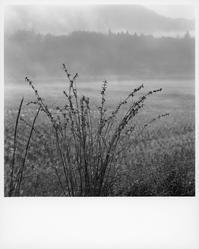 朝霧の道で拾って来た光景④。 - SunsetLine