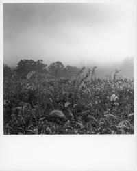 朝霧の道で拾って来た光景⑤。 - SunsetLine