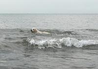 海に行ってきまちた! - パールとマーヤのほのぼの日記!