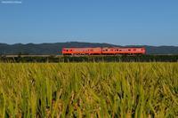 秋の風景。 - 山陽路を往く列車たち
