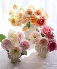 「滋賀県秋薔薇見学会」バラツアーがご好評のうちに催行されました。 - バラとハーブのある暮らし Salon de Roses