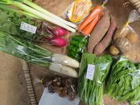今週の野菜セット10月4週目 - まるみど農園のあれこれ日記