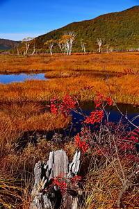 尾瀬は秋の色を夢見る - 風の香に誘われて 風景のふぉと缶
