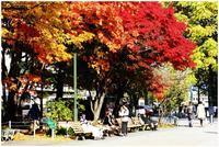 樹の葉の色が変わっただけで、こんなにも楽しいんだから、人生って良いよね - 札幌日和下駄