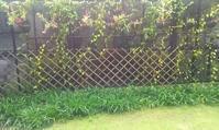 雨の庭とベランダの気温 - 放浪記