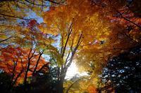 北大イチョウ並木 - なよら風