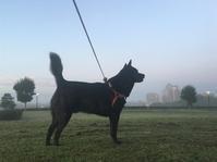 朝靄の中の散歩 - My Photo Album
