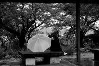 雨の日曜に #01 - Yoshi-A の写真の楽しみ
