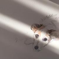 ふと気づくと。 - 犬の絵、描きます < Eyes of a Dog >