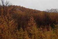 雨とカラマツとチョイ釣りの川 - オムイと森羅万象