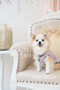 愛犬cheeは17歳になりました! - きれいの瞬間~写真で伝えるstory~