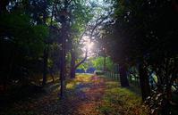 夕方の公園散歩 - 閑居堂 ~ のんびり小父さんの独り言