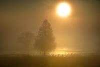 濃霧の遊水地 - 写日記