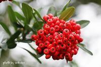 赤や黄色の実りの秋の散歩道(^^♪ - 自然のキャンバス