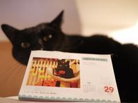 FELISSIMOフェリシモまいにちにゃんこカレンダー2017猫 てぃぁら編。 - ゆきねこ猫家族