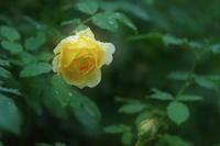 幸せ色 - kzking1963 Digital Photo Diary