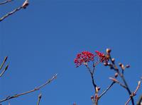 黄葉の大山⓶ - 清治の花便り