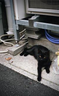 黒猫 - Fast Color
