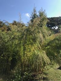 Kusaniwa Open Garden  in autumn 2017 ー 11月11日・12日ー - Healing Garden  ー草庭ー