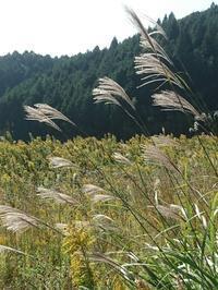 秋の野歩き - 山庭居 ~庭に居ます~