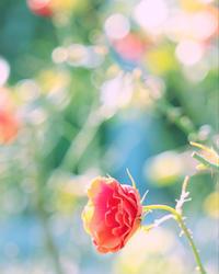「1人1人じっくり向き合うサロン」というご感想をいただきました♪ - 神戸市垂水区 Petit Lapin~プチ・ラパン~