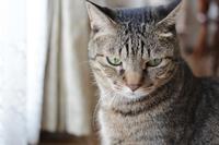自慢のイケにゃんが間抜けになる季節 - きょうだい猫と仲良し暮らし
