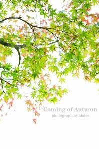 秋の始まり - for  someone