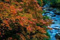 土砂降りの中の紅葉。 - 撃沈風景写真
