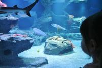 デュッセルドルフの水族館「Aquazoo」に行って来ました☆ - ドイツより、素敵なものに囲まれて②