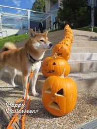 halloween - yamatoのひとりごと