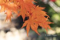 秋色に - 季節のおくりもの