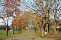サーモンパークを散歩するスピッツと見舞い上京からの帰宅 - 照片画廊