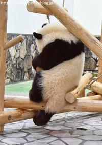2017年10月 白浜パンダ見隊 その2 - ハープの徒然草