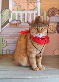今年のハロウィンは、ねこあつめHandmade Cat Costume- Nekoatsume - お茶の時間にしましょうか-キャロ&ローラのちいさなまいにち- Caroline & Laura's tea break