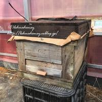 入蜂 - 苺農家になりました