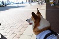 お昼はナン - むーちゃんパパのブログ 3